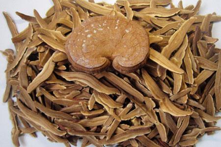 Ganoderma lucidum (Litchi)